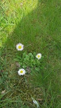 Kwiaty w naszym ogrodzie budzące się do życia na wiosne