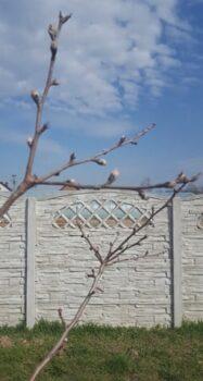 Rośliny w naszym ogrodzie budzące się do życia na wiosne