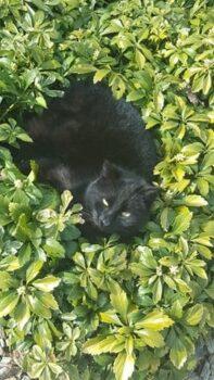 Kot pośród roślin w ogrodzie w naszym zakładzie
